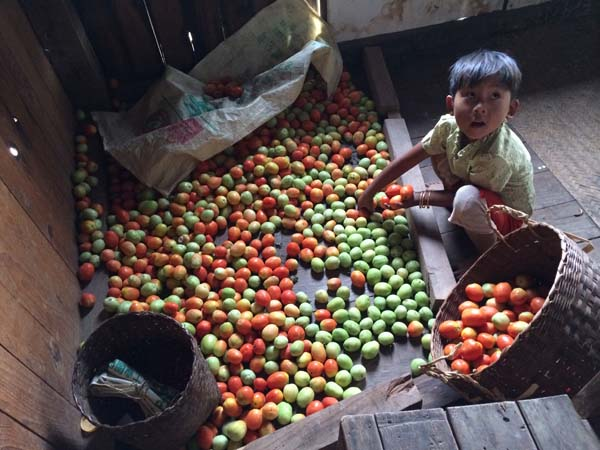 Danu girl with tomatoes