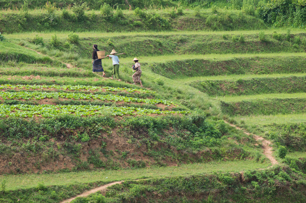 Heading to fields in Shan State