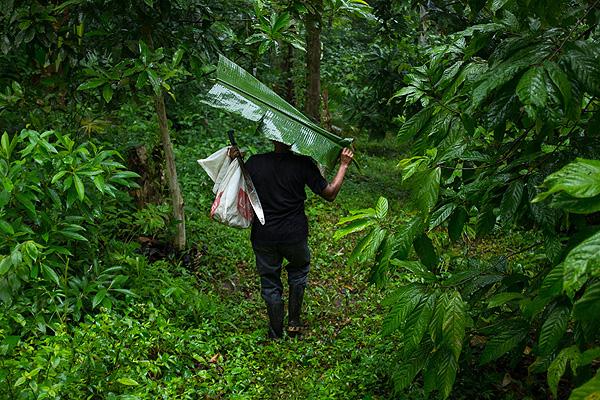 Eladio on forest farm