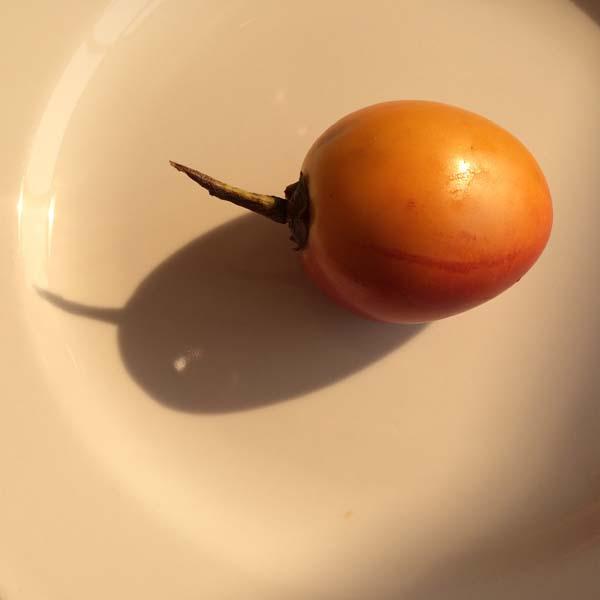 tree tomato 01