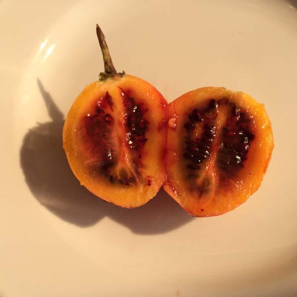 tree tomato 02