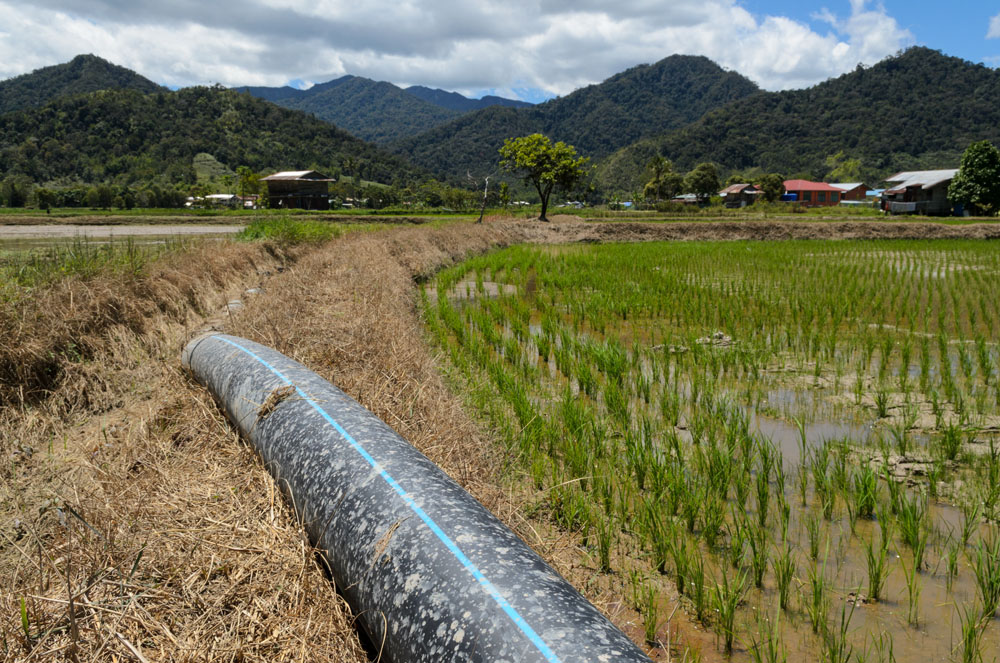 A massive plastic irrigation pipe straddles two rice fields that are worked by Ceria, the company that brought mechanized rice farming to the Kelabit Highlands. They also brought the irrigation infrastructure to increase the yields of the fields they cultivate. A logging road has brought many changes to the Kelabit people of the interior highlands of Sarawak in Malaysia. One of the biggest shifts is mechanized rice growing, which is changing how the grain has been grown for generations.  -Photo ©2013/Jerry Redfern