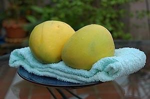 Campus Mangoes