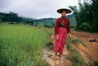 Shan farmer