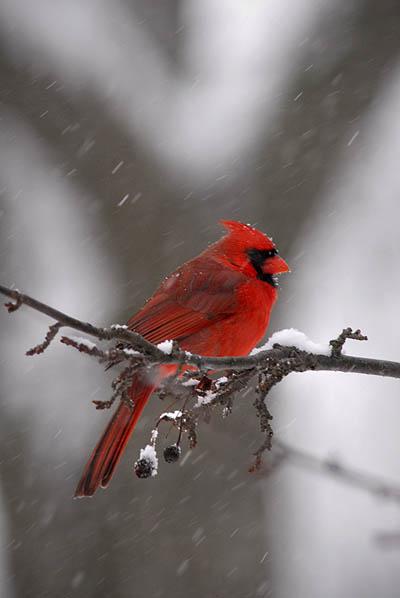 RS Holiday Bird