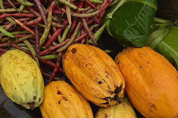 Belize cacao and beans